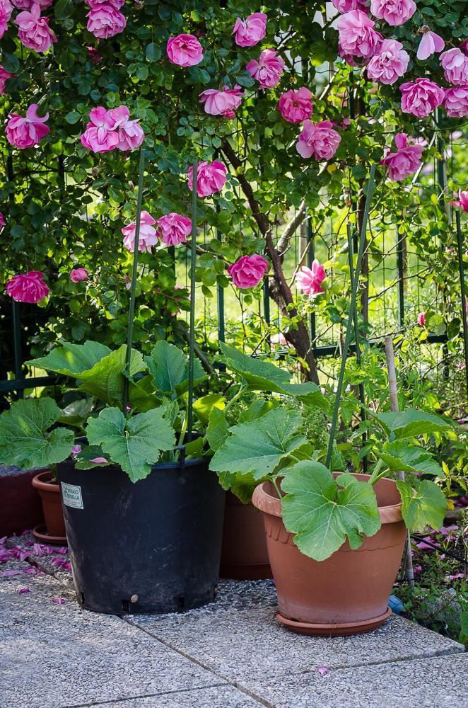 rose e orto